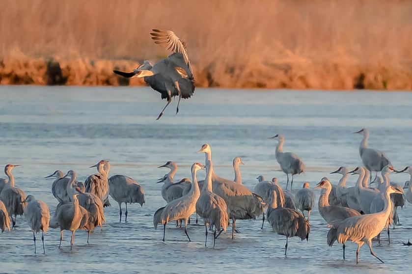 Landing Crane 2