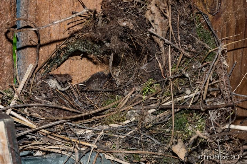Garden Shed Nest-5.jpg