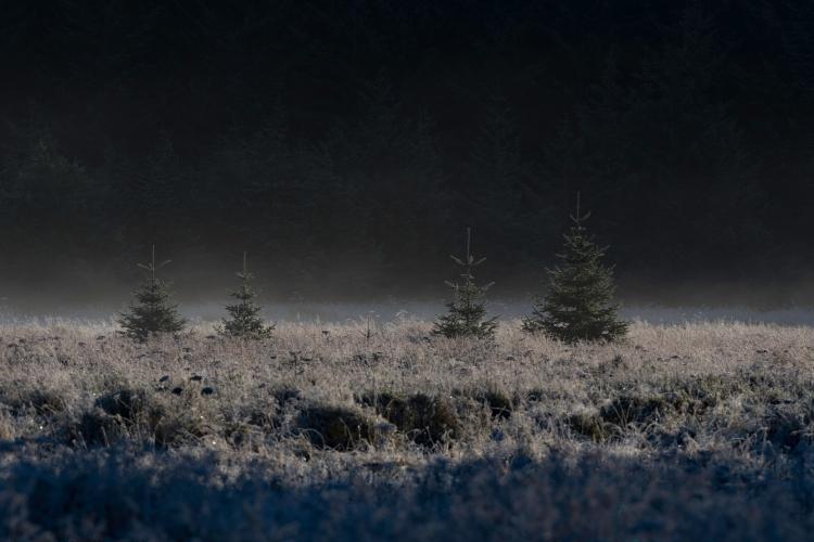 Frost on Cowee Meadow.jpg