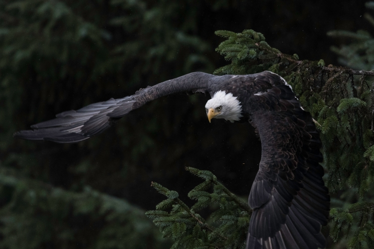 Take off near Juneau